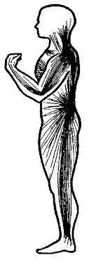 fascia-man
